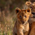 AfricanWorld und tourware: eine stabile Beziehung!