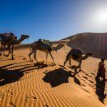 Marokko- und Europa-Spezialist wird neuer tourware Kunde